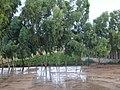 Wet ground in Sindh - panoramio.jpg