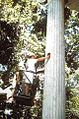 Whig hall column2.jpg