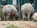 White Rhinoceros (2379577299).jpg