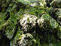WikiProjekt Landstreicher Wasserfall Hinang 46.jpg