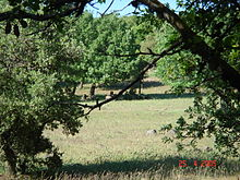 Wild Boars at Odem Forest Reserve DSC00733.JPG