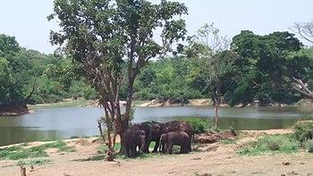 Wild Elephants feeding in hers.jpg