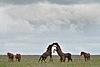 Wild horses in Rostovsky nature reserve.jpg