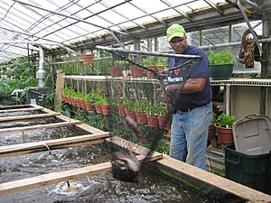 Fish farming thesurvivalplaceblog for Wisconsin fish farms