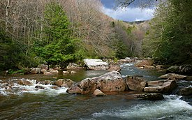 Williams River-27527.jpg