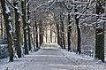 Winter Wonderland (about a year ago .....) (6529979645).jpg
