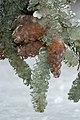 Winter in Western Oregon (23580630199).jpg