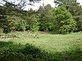 Within Castle Dyke, Little Haldon - geograph.org.uk - 1327054.jpg