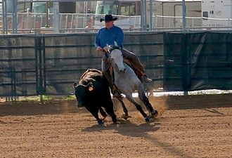 Working cow horse - Image: Working cow horse Scottsdale 2017 18