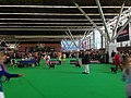 World Dog Show, Amsterdam, 2018 - 10.JPG