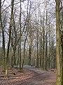 Wuppertal Barmer Wald 0007.jpg