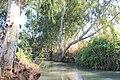 Yarkon Springs Afek (201).jpg