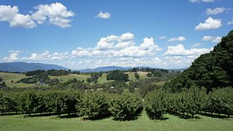 Yarra Valley - Warburton Ranges view from Seville Hill Winery.