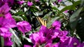 File:Yellow butterfly clip.webm