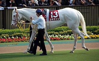 """Lethal white syndrome - This Thoroughbred mare was born pure white with pink skin. Such foals are occasionally born with no apparent white ancestry. This mare does not carry the LWS gene, and her coat is termed """"dominant white""""."""