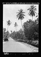Zanzibar. Motor road bordered by clove trees and stately palms LOC matpc.17662.jpg