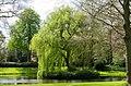 Zeist, Vrijheidsboom Utrechtseweg 2.jpg