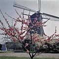 Zicht op de molen, gezien vanaf kerkhof - Vreeland - 20362927 - RCE.jpg
