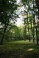 Znam'yans'kyi district, Kirovohrads'ka oblast, Ukraine - panoramio (2).jpg