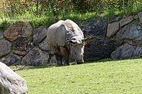 Zooparc de Beauval - Rhinocéros indien - 2016 - 002.jpg