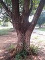 """Trunk of a tree"".jpg"