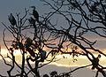 (1)Centennial Park sunset 105a.jpg