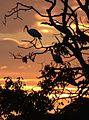 (1)Centennial Park sunset 154a.jpg
