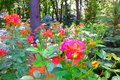 File:(66) ROSES IN GORKY PARK IN CITY OF KHARKIV STATE OF UKRAINE VIDEO BY VIKTOR O LEDENYOV 20160621.ogv