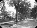 (Ulmus?) & Acer – Wash St., Hartford, CT (5168253640).jpg
