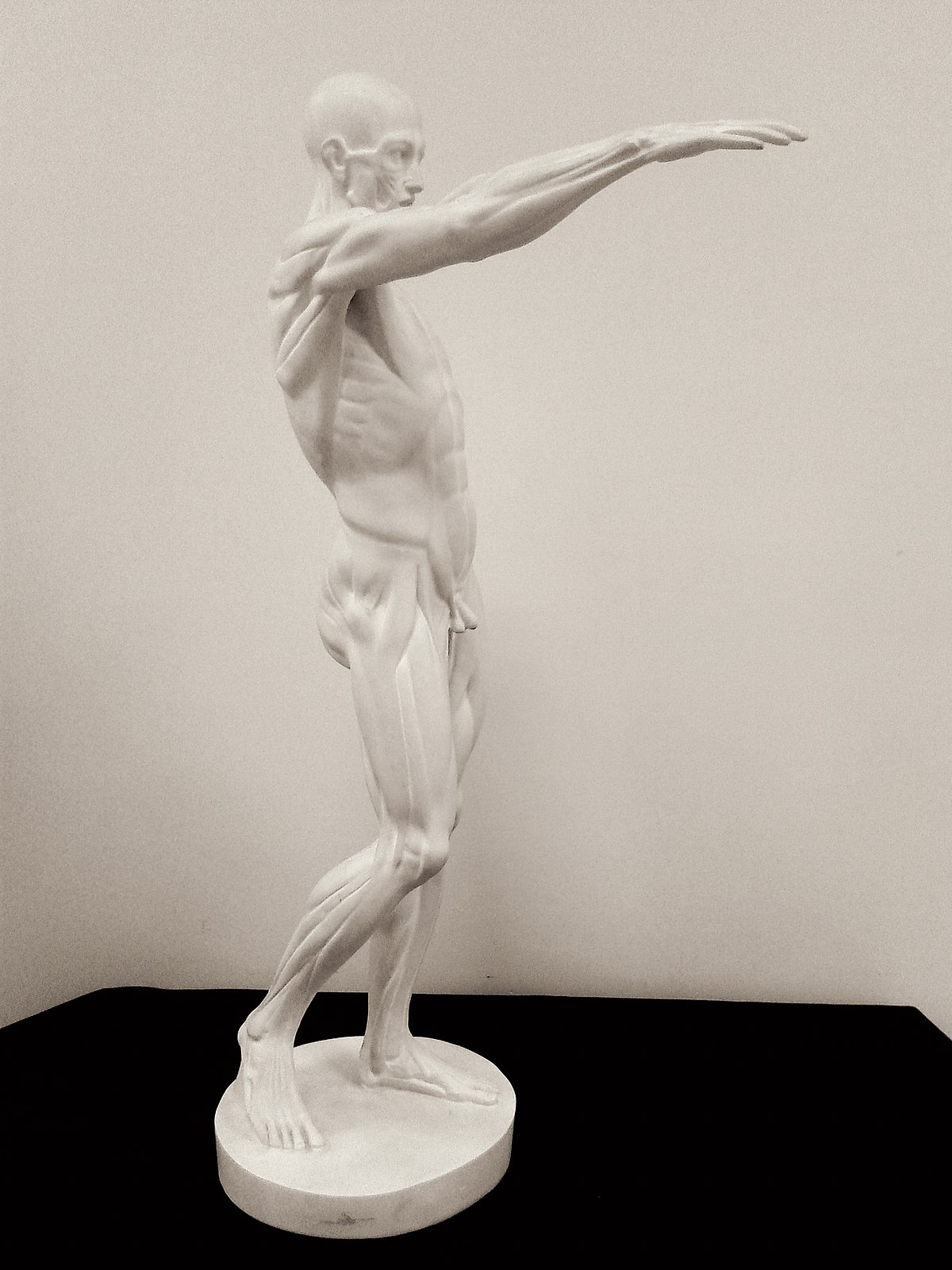 Anatomie Artistique Wikipedia