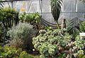 Überwinterung der Pflanzen 1.jpg