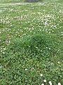 Čarodějné kruhy v Lublaňské (009).jpg