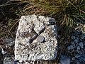 Češka kruna na Supinama04797.JPG