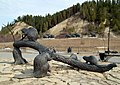 Бобры в Археопарке - panoramio.jpg