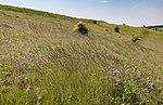 Весняні трави.jpg