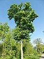 Графський парк (парк Ніжинського педінституту), Ніжинський район, м. Ніжин 74-104-5004 21.JPG