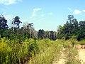 Грунтовка - panoramio (16).jpg
