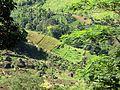 Долина - panoramio (29).jpg