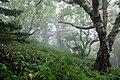 Лес на склонах влк. Менделеева 2.jpg