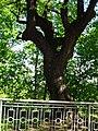 Міський парк IMG 8695.jpg