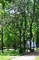 Парк Берёзовая роща в Киеве. Фото 10.jpg
