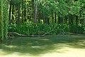 Резерват Камчия - десният бряг.jpg