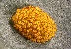 Сорус папоротника Polypodium aureum.jpg