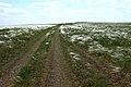 Степная дорога в юго-западном направлении - panoramio (1).jpg