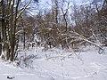 Украина, Киев - Голосеевский лес 90.jpg