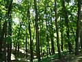 Царицыно - panoramio (47).jpg