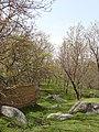 روستای قلعه اجل بیک - دورودان - تویسرکان - panoramio.jpg