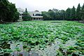 中山大学Scenery in Guangzhou, China - panoramio (4).jpg