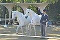京都競馬場の馬事アトラクション「ファンタジックホースショー」(2015年10月25日).JPG