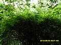 凤台山(鸡笼山)森林景色 - panoramio.jpg